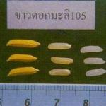 ความแตกต่างของข้าวหอมมะลิ 105 กับ หอมมะลิ กข. 15
