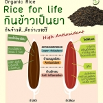 ข้าวที่มี สารต้านอนุมูลอิสระ (antioxidant) และสารต้านการอักเสบ (antiinflammation)
