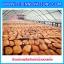 โรงอบแห้งพลังงานแสงอาทิตย์ (Solar Green House) ขนาด 8.00x12.40 เมตร พื้นที่รวม 99.2 ตารางเมตร แบบอบแห้งพพ.2 SOLARDOME-PP2 thumbnail 7